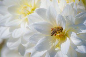 Včely, ponožky a my…