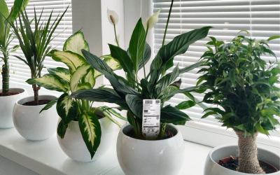 Rastlinné pasy: Už aj rastliny musia mať svoje doklady na cestách